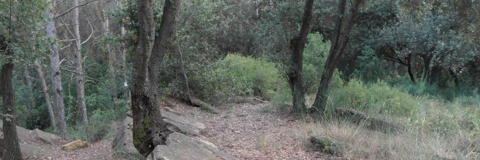 Puig d'en Roca